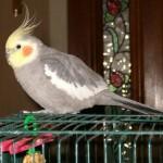 Birdy 004