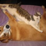 Kitty and Jake cute